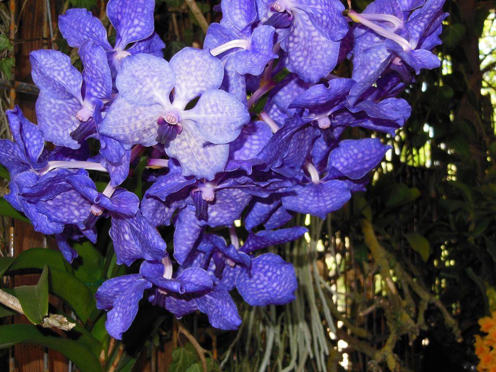 Flandern Floralien