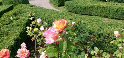 Rosarium Sangerhausen